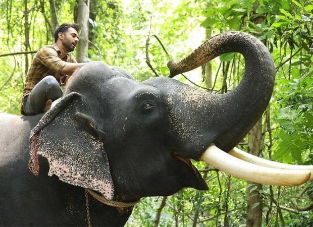 हाथी मेरे साथी के लिए पुलकित सम्राट ने जंगल में हाथी के साथ बिताए डेढ़ साल के एक्सपीरियंस को शब्दों में किया बयां